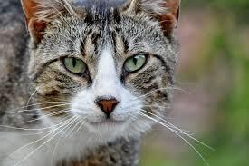 Gato con mirada profunda